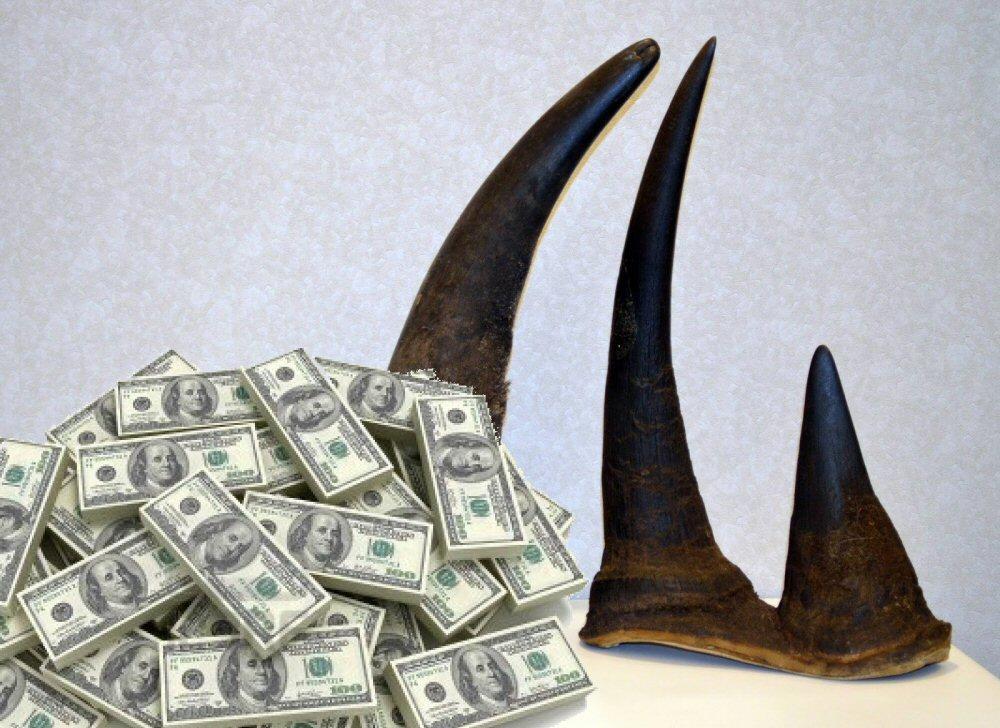 Rhino-Horns-2015-Wildlifeangel