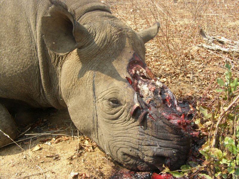 rhino-poaching-naminia-2015-Wildlifeangel