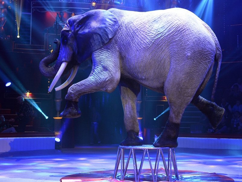 Circus-elephant-2016-Wildlifeangel