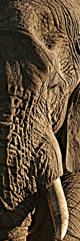 Elephant-edito-2016-Wildlifeangel