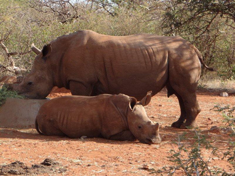 OZ-rhinos1