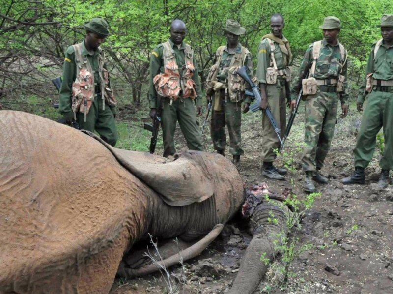 Ouganda-braconnage-2016-Wildlifeangel