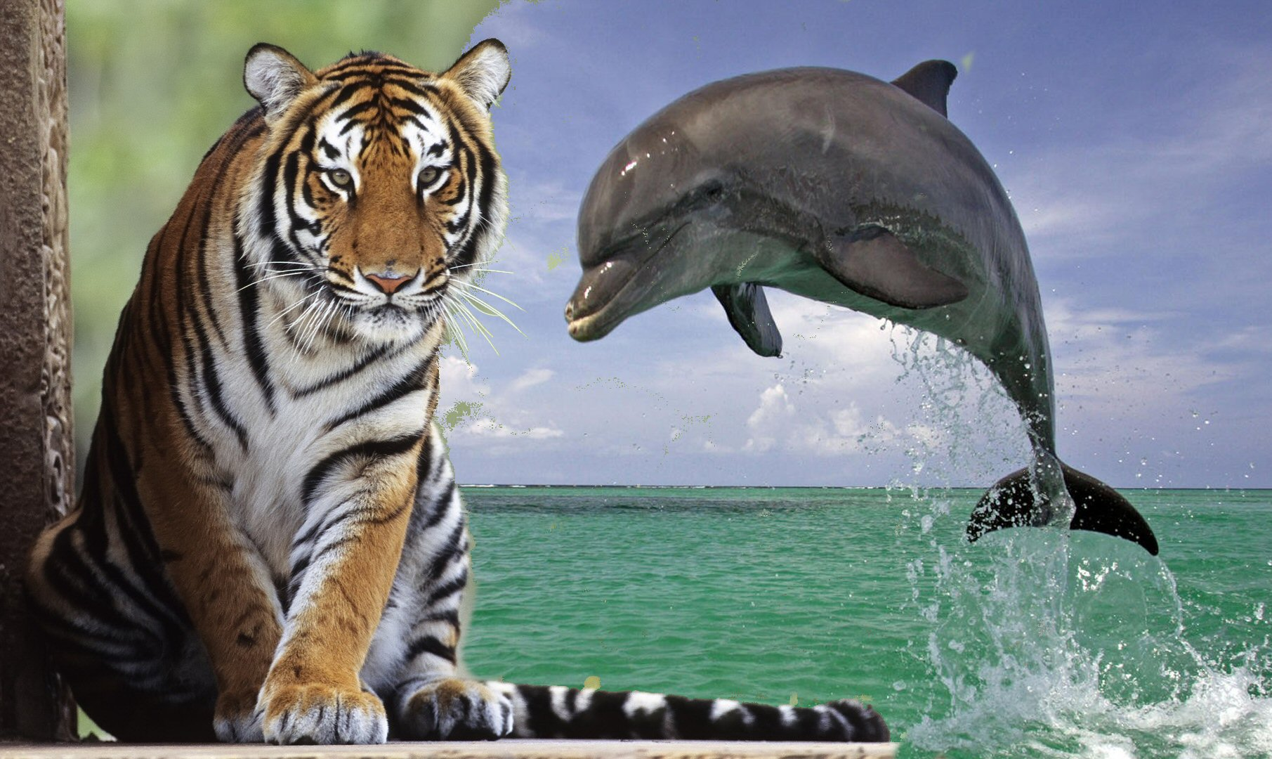 dauphin_tigre