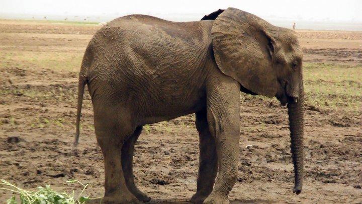 elephants-mali