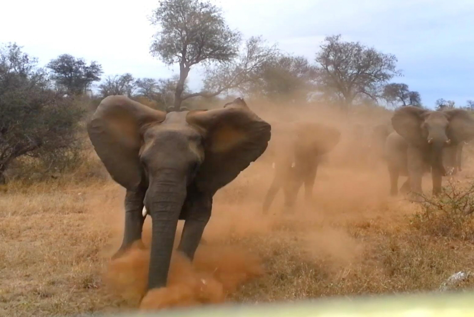 Attaque éléphant