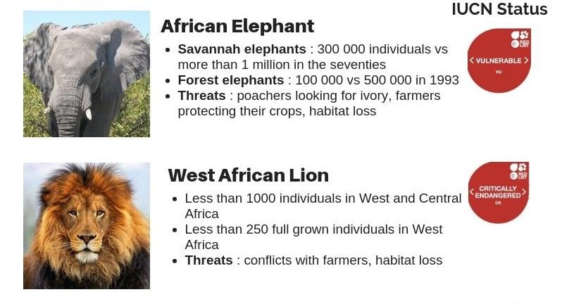 African-Wildlife