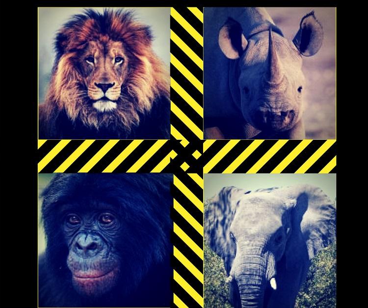 animaux-menaces-afrique