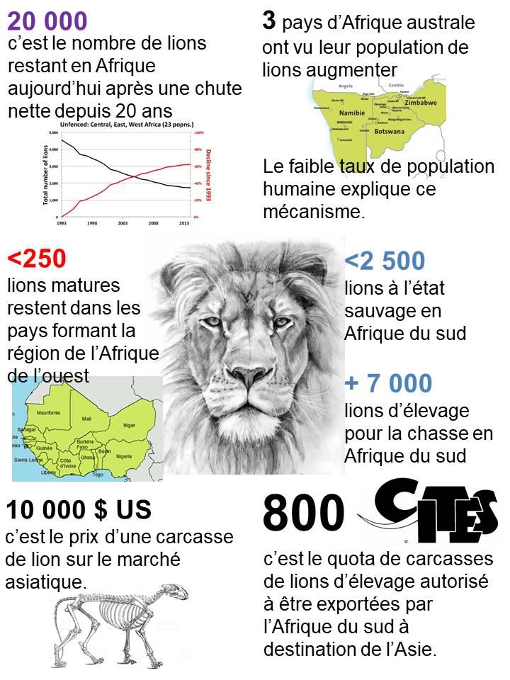 Le lion, une espèce menacée