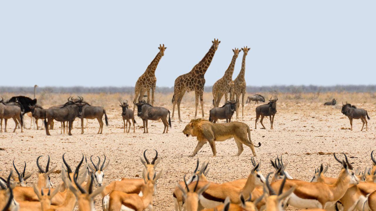 parc-national-etosha-namibie