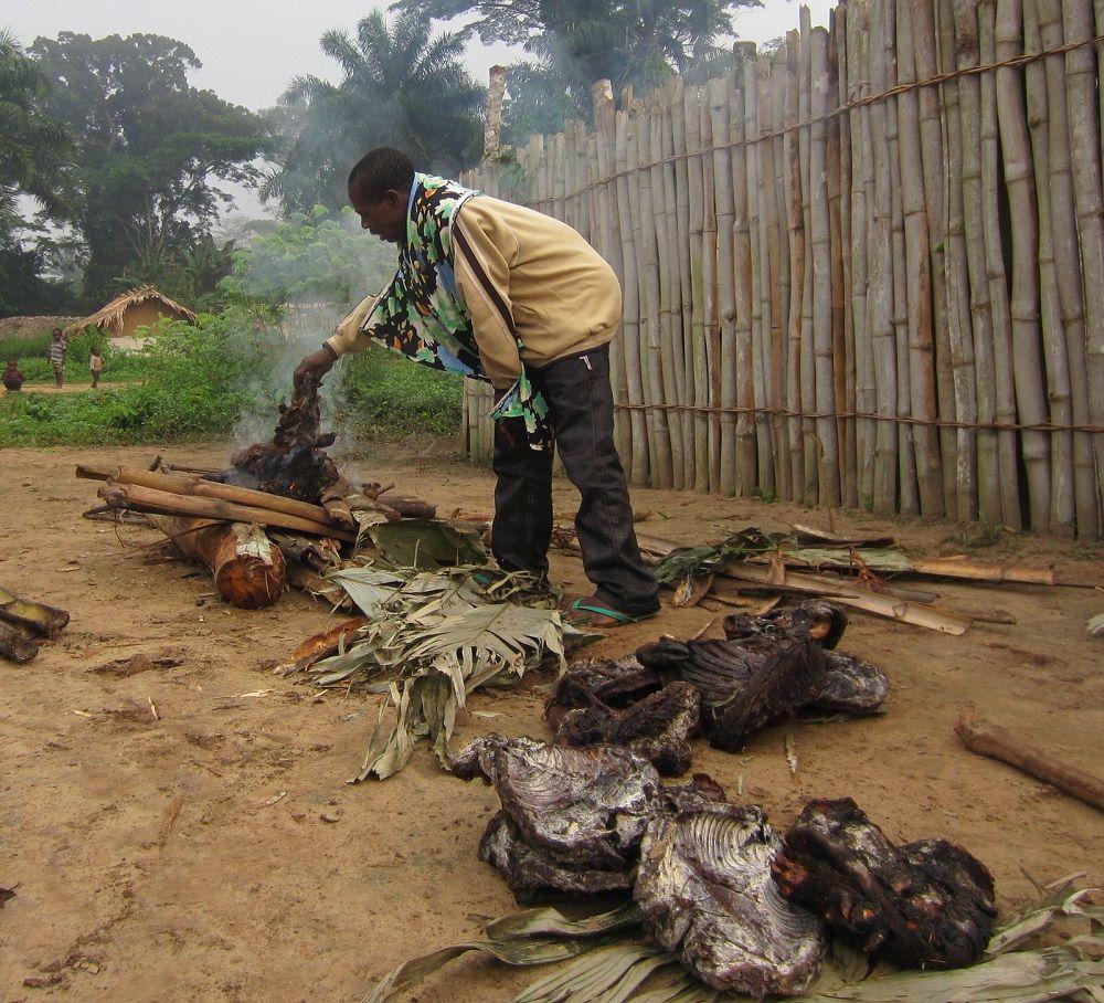 Bonobo chassé pour la viande de brousse