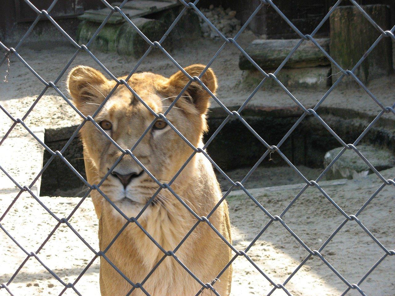captivite-rewilding-difficile