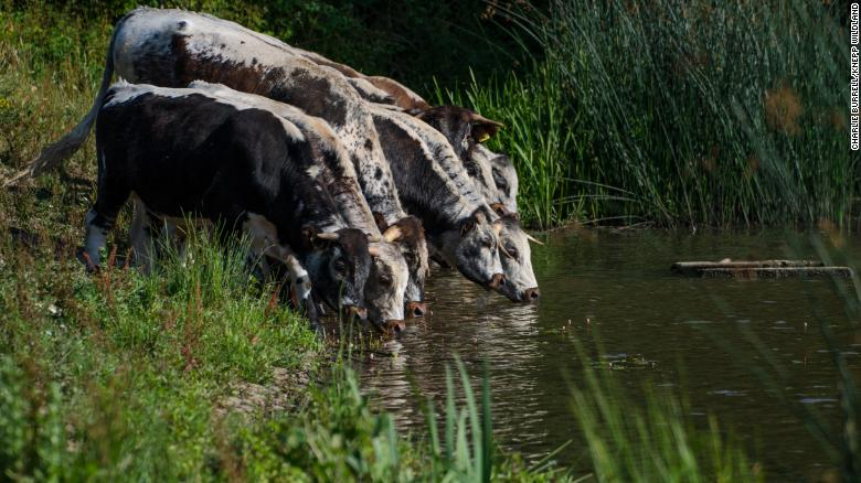 rewilding-agriculture